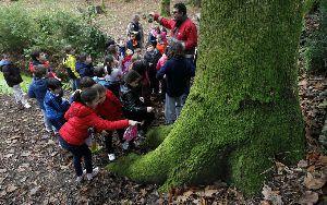 Los secretos del alcanforero que huele a verde y a hierba